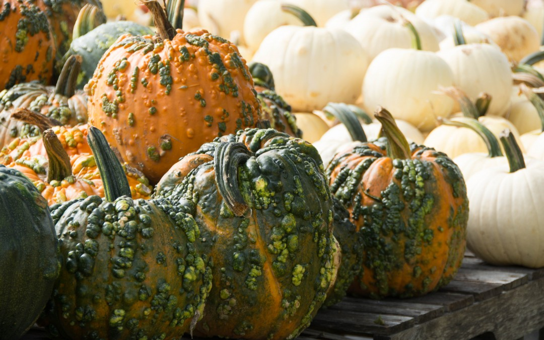 Entertablement Abroad – It's Pumpkin Time!