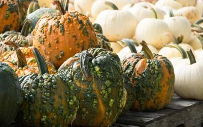 Entertablement Abroad – It's Pumpkin Time!
