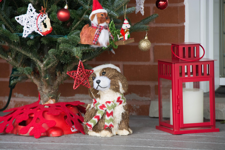 frontporchchristmasdogs-2125