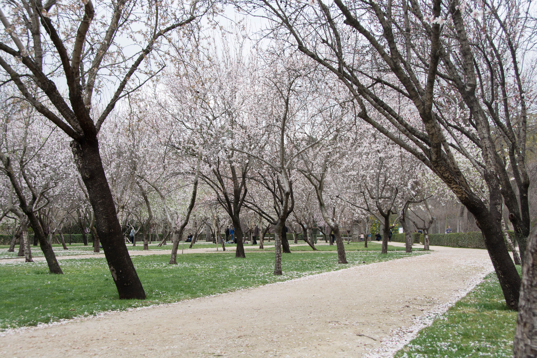 Madrid-3135