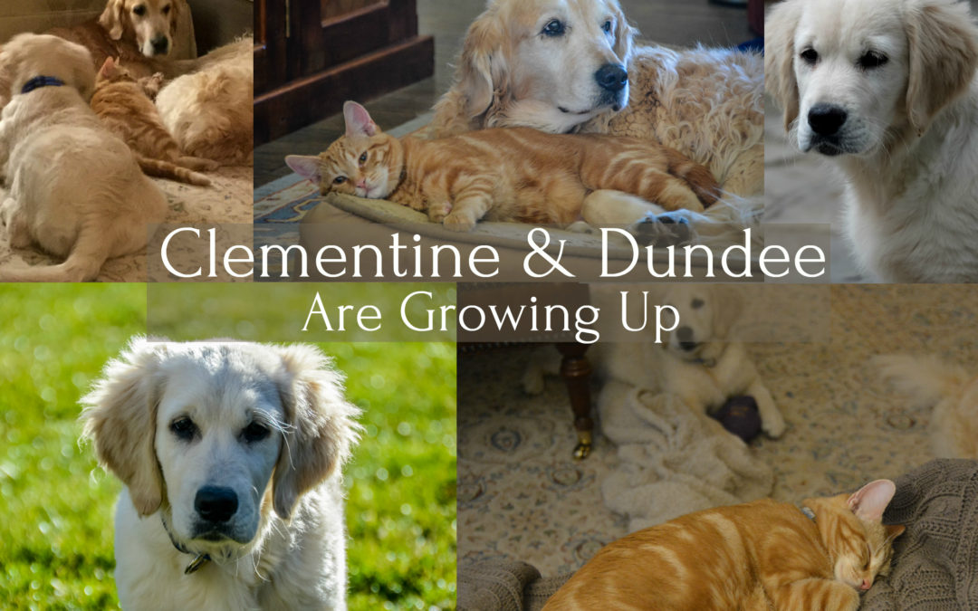 Clementine & Dundee Are Growing Up Fast