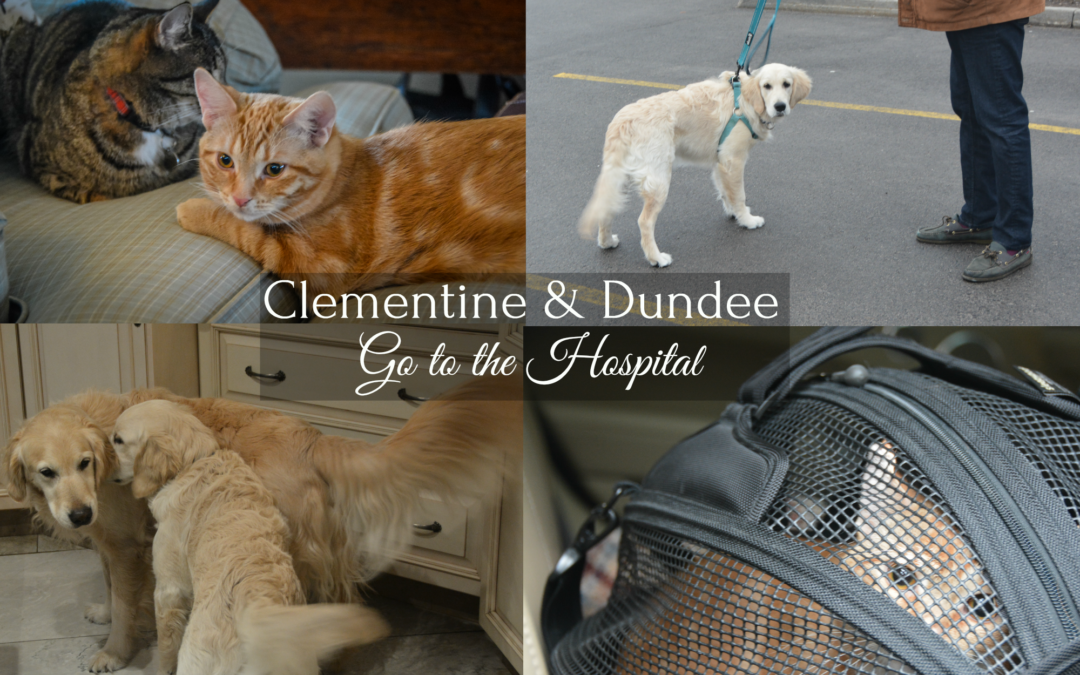 Clementine & Dundee Go to the Hospital